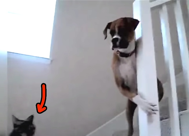 Dogs Who Are Terrified Of Walking Past Cats Video