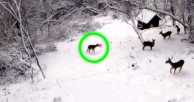 Hidden Camera Proves That Rudolph Is Real. Be Sure To Show This To The Kids!
