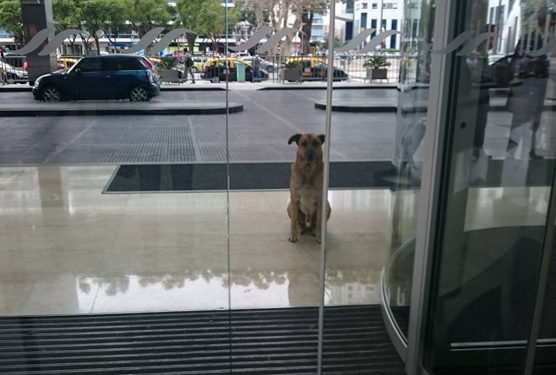 Dog Wouldn't Stop Waiting For Her Outside The Hotel So She Adopted Him