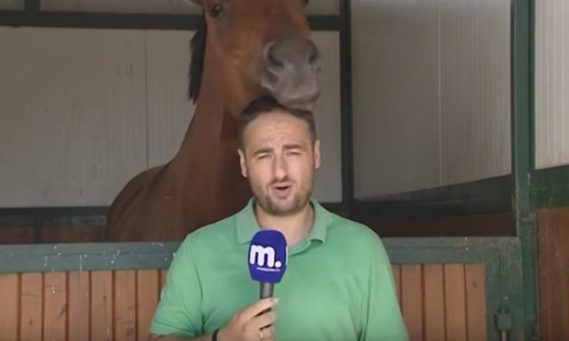 Horse Can't Help Bugging This News Reporter While the Camera Is Rolling
