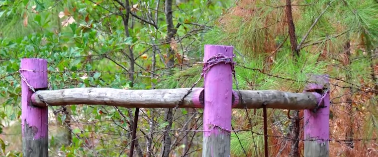 If You See Purple Paint on Fence Posts in Texas, Leave Immediately