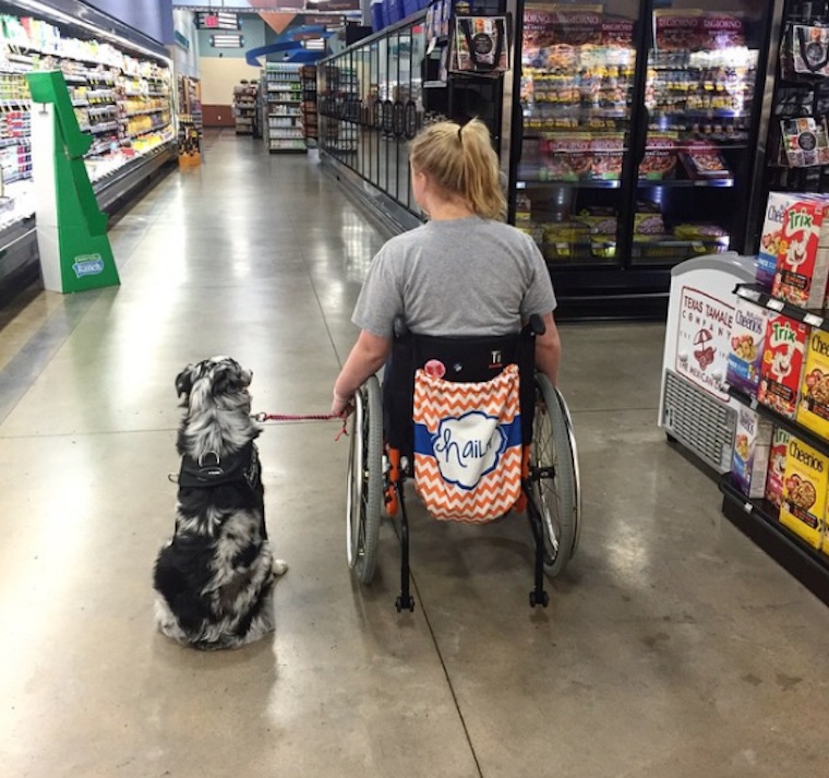 Teen Warns People Of The Serious Consequences When Petting Service Dogs Without Permission