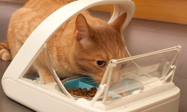 SureFeed Microchip Pet Feeder: Make Sure Your Pets Eat From Their Own Bowls