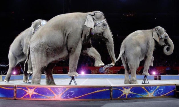 Elephants Will No Longer Be Forced to Perform in New York Circuses Ever Again