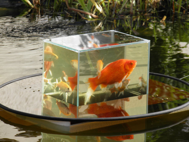 Flying aquarium floating tank give your fish an above for Above water fish tank