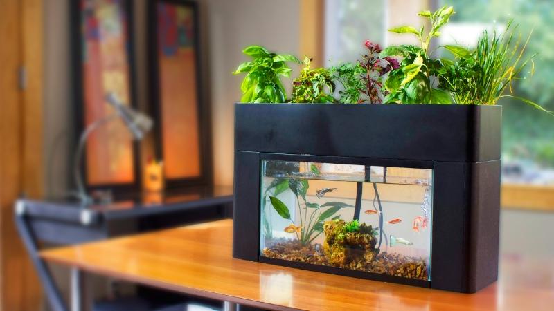 AquaSprouts Garden: The Perfect Low Maintenance Aquarium U0026 Aquaponics Kit  For Your Home Or Office
