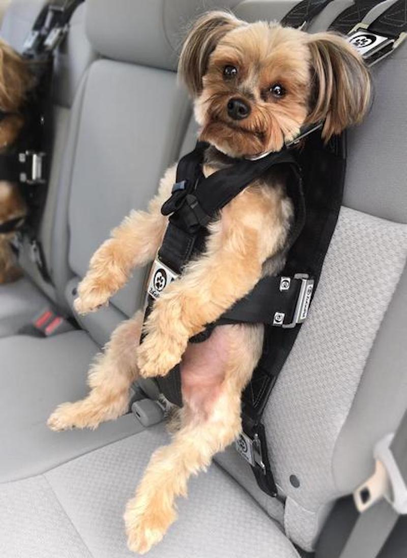 Zugopet Rocketeer Pack Keep Your Dog Safe When You Drive
