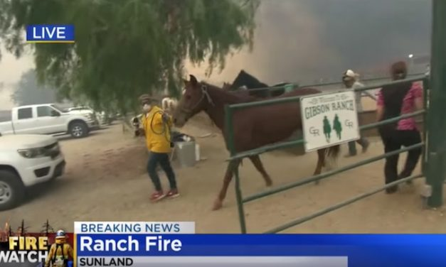 Reporter Spots Helpless Horses While Reporting on California Wildfires, Has to Intervene