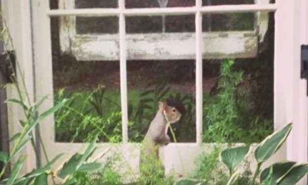 Squirrel Taps on Window Every Day for 8 Years, Then the Family Realizes Why