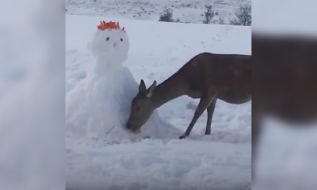 Evil Snowman Blocks Deer's Path, but the Deer Has an Ingenious Solution