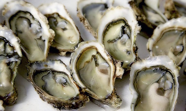 Woman Passes Away from Bacteria After Eating Raw Oysters—Here's What to Watch Out For