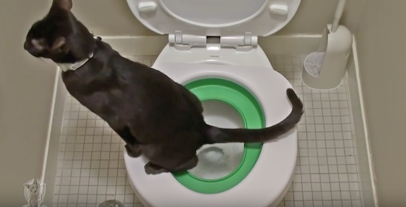 Litter Kwitter Train Your Cat To Use The Toilet