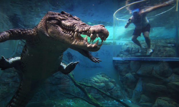 Crocosaurus Cove: Swim with Crocodiles in the Cage of Death