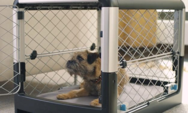 Diggs Revol Dog Crate: The Ultimate Comfy and Stylish Dog Crate