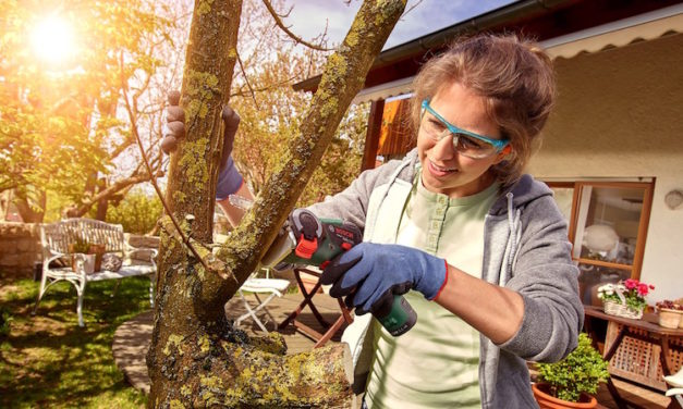 Bosch EasyCut NanoBlade Mini Chainsaw: The Saw That Makes DIY Easy