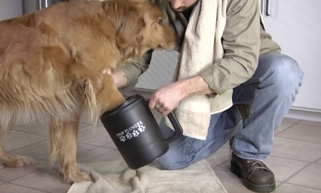 Paw Plunger: Giant Mug Cleans Your Dog's Paws in Seconds