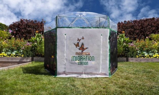 Monarch Migration Station: Learn All About Butterflies in a Fun Way