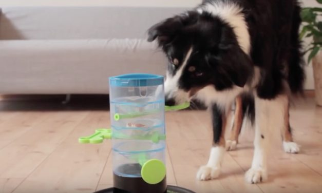 Trixie Pet Products Windmill Toys: The Toys That Train Your Pet's Brain