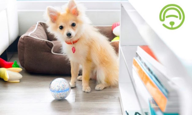 Pebby: Advanced Pet Fetch Ball Controlled By Your Smartphone