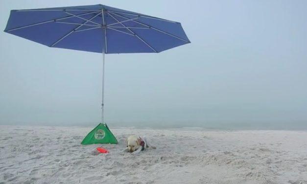 beachBUB Umbrella Base: The Easiest Way to Secure Your Umbrella