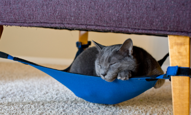 Cat Crib: The Space-Saving Hammock for Your Cat