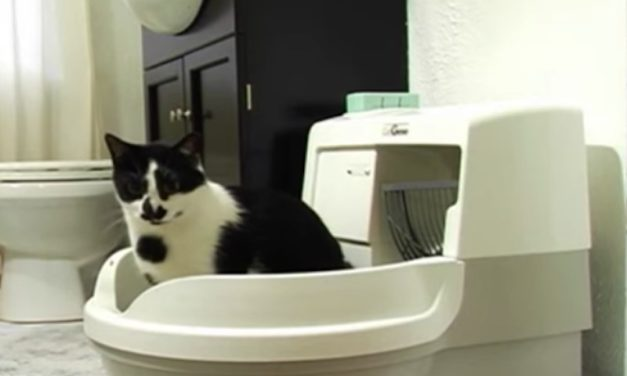 CatGenie: The Self-Cleaning, Self-Flushing Cat Toilet
