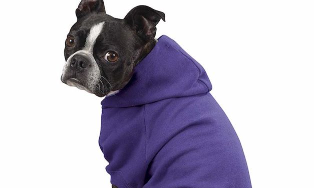 Zack & Zoey Dog Hoodie: Dress Up Your Dog in a Comfortable Way