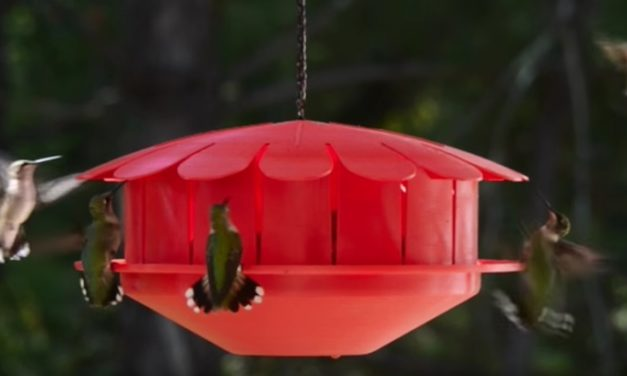 Humm-Bug Hummingbird Feeder: The Ingenious Way to Attract Hummingbirds
