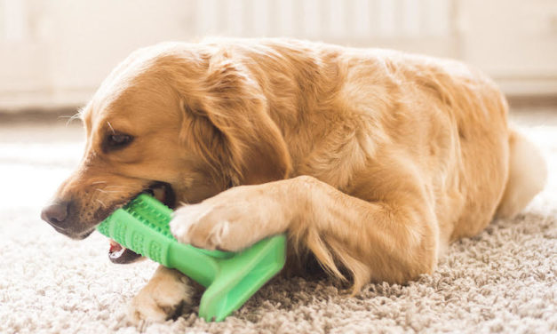 Bristly: The Effective and Safe Dog Toothbrush