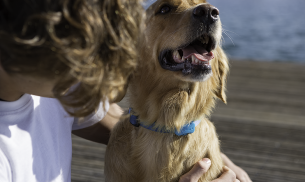 FitBark 2: The Fitness Tracker for Your Dog