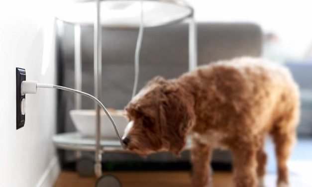 Fuse Chicken Titan Charging Cable: The Indestructible Cord for Your Phone