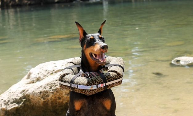 Headz Up Pets Watercollar: Prevent Your Dog from Drowning
