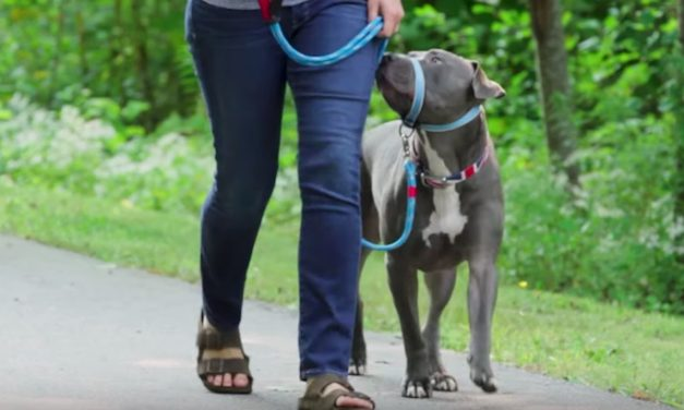 Kurgo Snout About Strap Dog Collar: Stop Your Pet's Leash Pulling