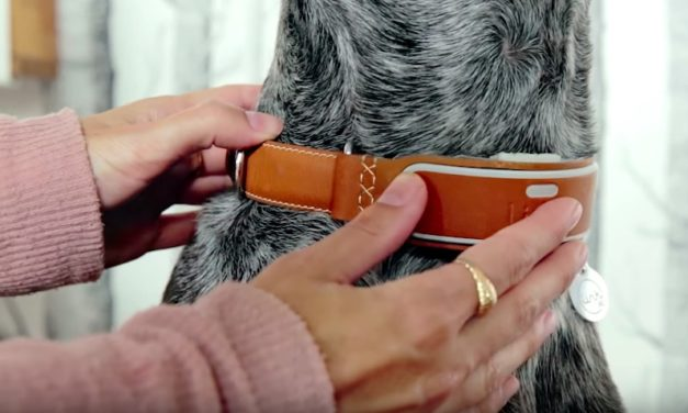 Link AKC Smart Dog Collar: The GPS Tracker for Your Dog