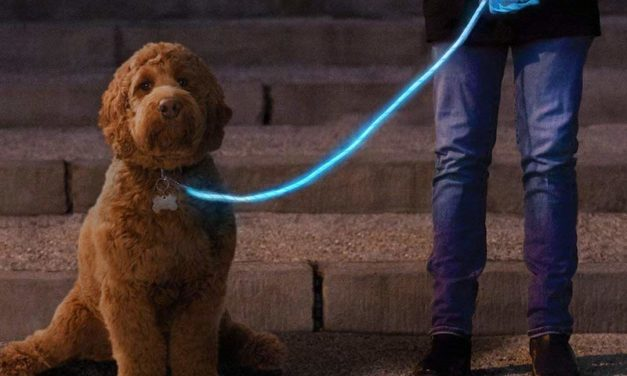 Nitey Leash: The Glow-in-the-Dark Leash for Your Dog
