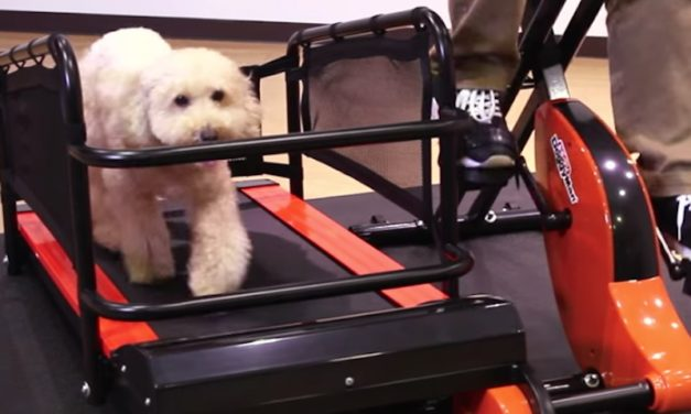 Doggy Health Treadmill: Exercise Without Going Outside