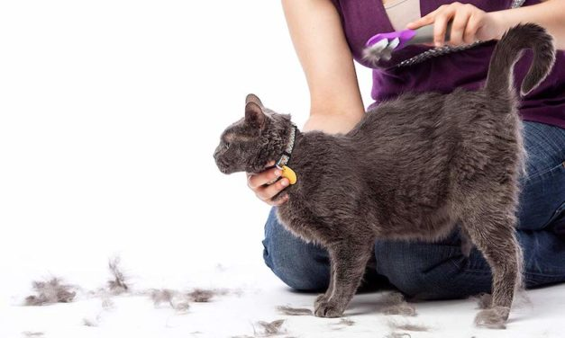 Groomer's Best Fur Fetcher: Reduce Shedding with Just One Brush