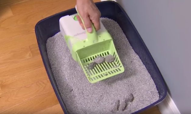 Neater Scooper: The Cleaner Way to Maintain Your Litter Box