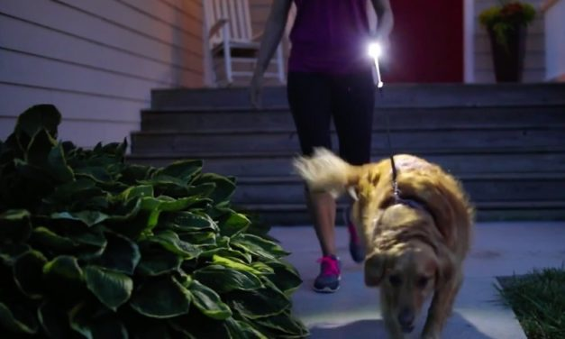 WalkWhiz Dog Leash: Keep a Light on Your Dog During Night Walks